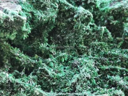 malaquita-verde-congo-m000079-2-b