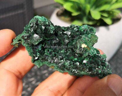 Malaquita-brillante-verde-m000109-b