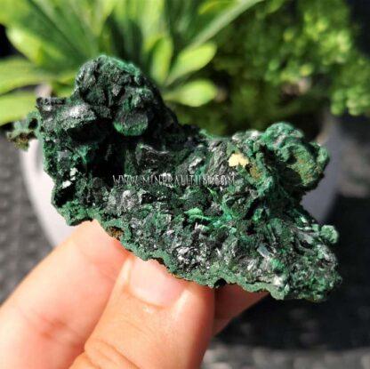 Malaquita-brillante-verde-m000109-d