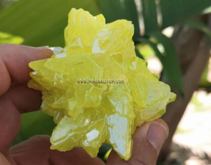 Azufre-Sicilia-amarillo-m000154-c