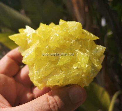 Azufre-sicilia-amarillo-m00000158-b